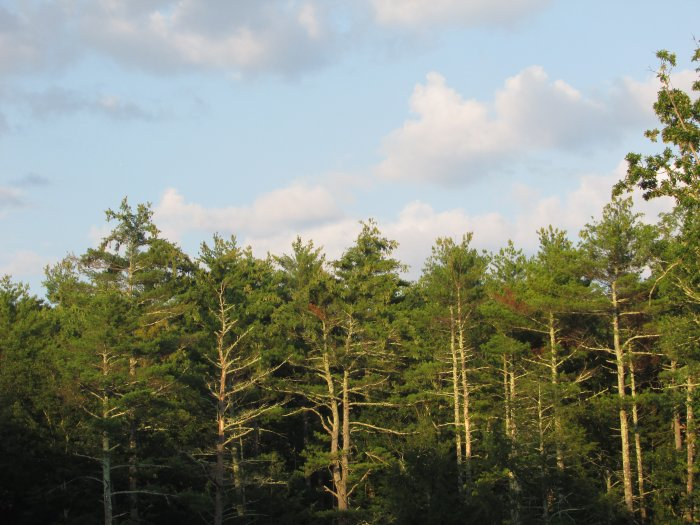 Blue Skies and Forest Woods at Rip Van Winkle Campgrounds