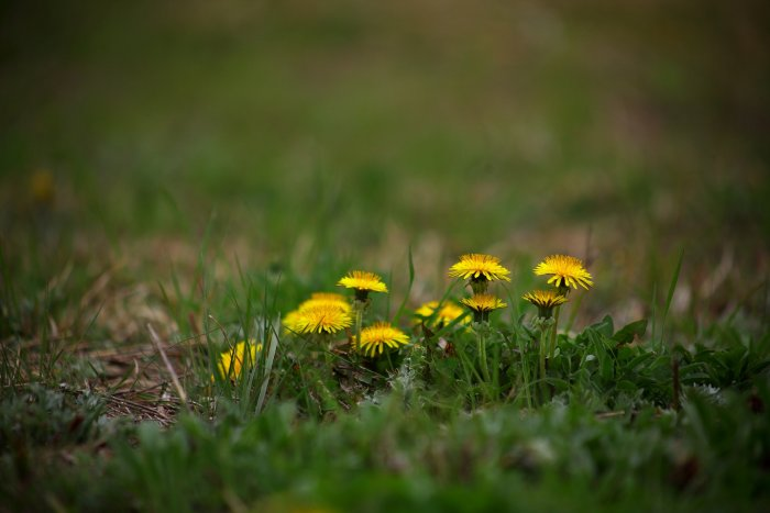 grass and flowers signifying spring camping