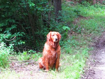 Dog sitting on trail at Rip Van Winkle Campgrounds in the Catskills