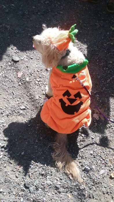 Pets love Halloween too!