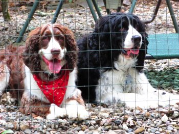 Dogs camping at Rip Van Winkle Campgrounds in the Catskills NY