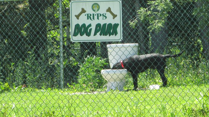 Rip's Dog Park at Rip Van Winkle Campgrounds in Saugerties, NY