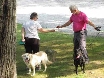 Dogs in Rip's Dog Park at Rip Van Winkle Campgrounds in Saugerties, NY