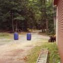 bear in campground
